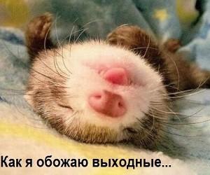Как в России отдыхаем на ноябрьские праздники