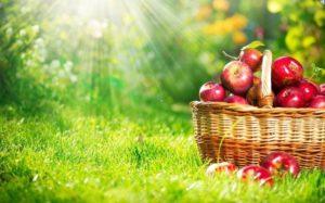 Яблочный спас 2016 года, какого числа