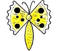 бабочки из цитрусовых4